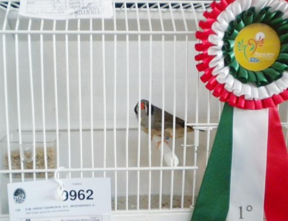 Campionato Italiano Rimini 2012 (1° class. guancia nera femmina)
