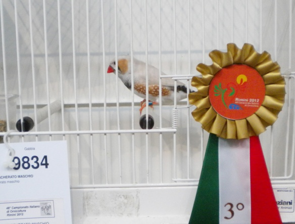 Campionato Italiano Rimini 2012 (3° class. maschio)