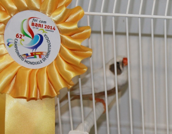 Campionato Mondiale 2014 (1° class. cat. guancia tutti)