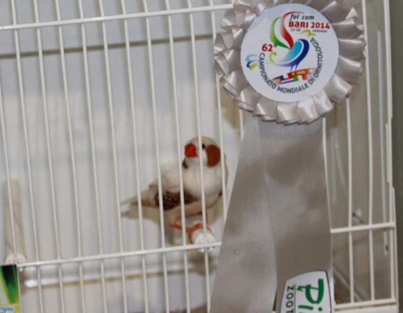 Campionato Mondiale 2014 (2° class. cat. feomelanico)