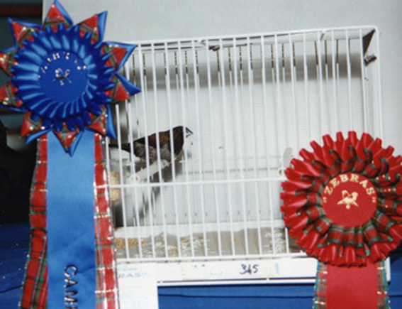 Best in show Zebras 1999