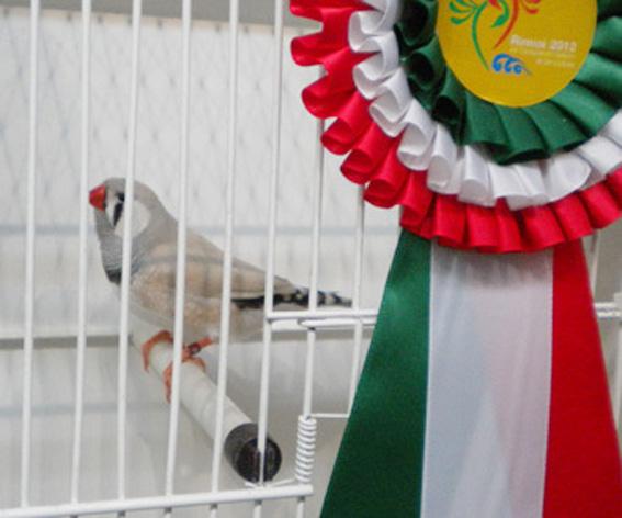 Campionato Italiano Rimini 2012 (1° class. diluito maschio)