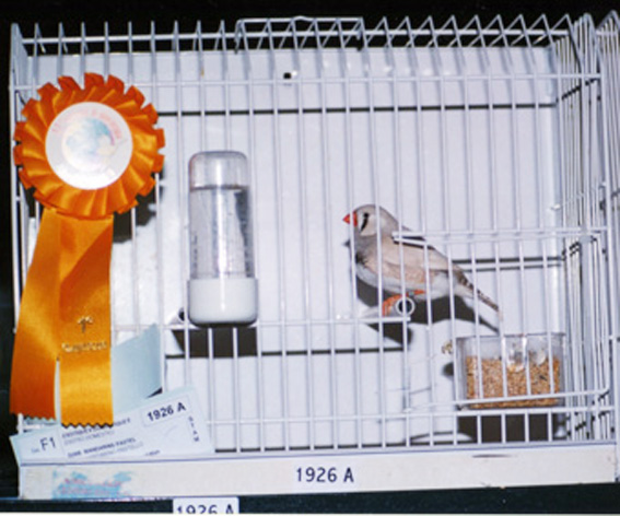 Campionato Mondiale Abruzzo '99 (1° class. stamm)