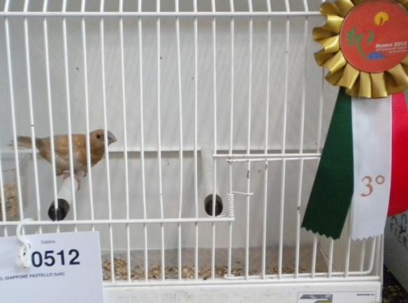 Campionato Italiano Rimini 2012 (3° class. cat. pastello)