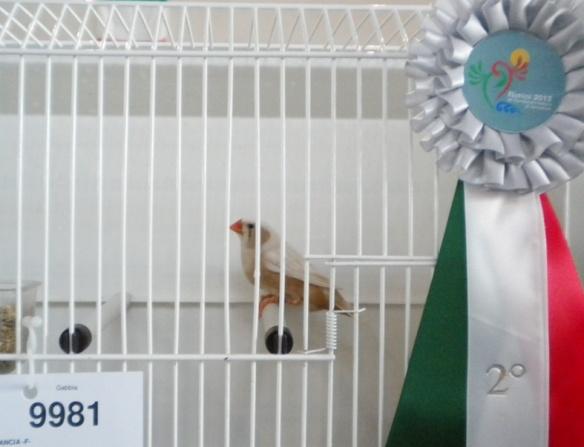 Campionato Italiano Rimini 2012 (2° class. guancia femmine)