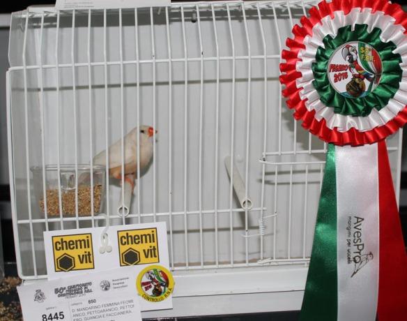 Campionato Italiano Pesaro 2015 (1° class. Feo femmina)