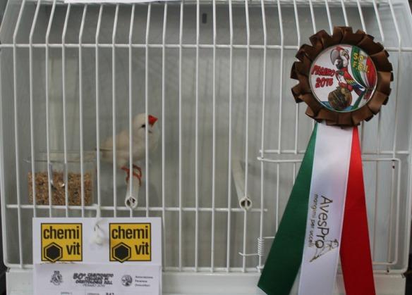 Campionato Italiano Pesaro 2015 (3° class. Ino femmina)