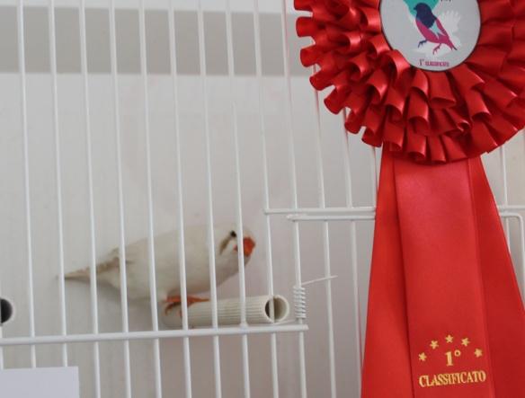Exotica 2013 (1° class. cat. alter mutation)