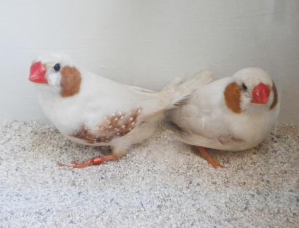 due maschi con brutto disegno dei fianchi