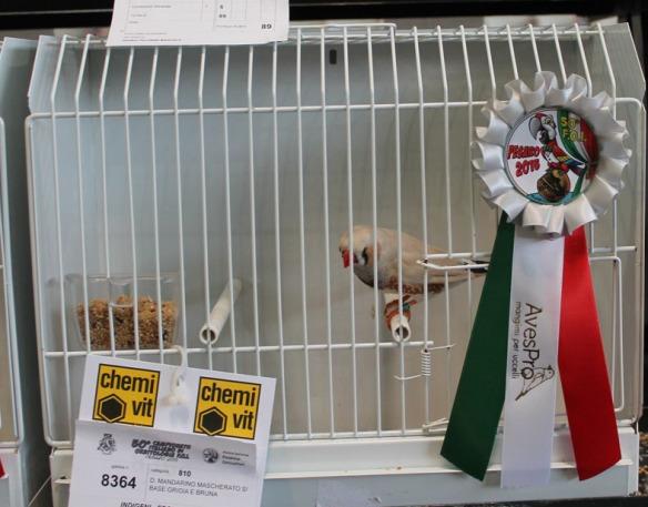 Campionato Italiano Pesaro 2015 (2 class. mascherato maschio)