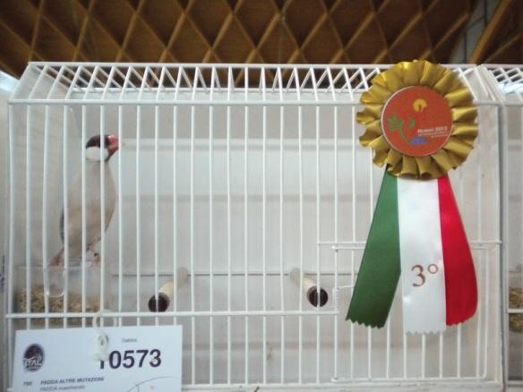 Campionato Italiano Rimini 2012 (3° class. Cat. altre mutaz.)