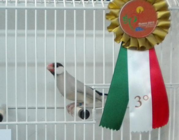Campionato Italiano Rimini 2012 (3° class Altre mutaz.)