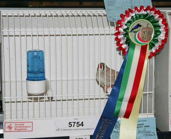 Campionato Italiano Parma 2010 (1° class. femmina)