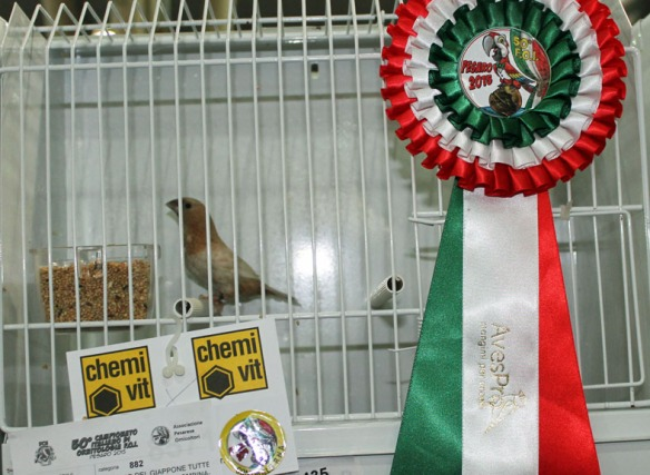 Campionato Italiano Pesaro 2015 (1° class. altre mutazioni)