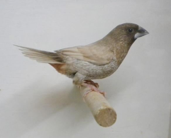 Moka bruno pastello (maschio)