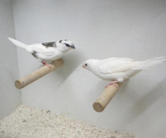 Bianco e scudato a confronto