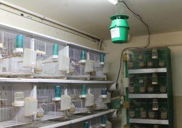 Trappola per farfalle posta in alto al centro dell'allevamento