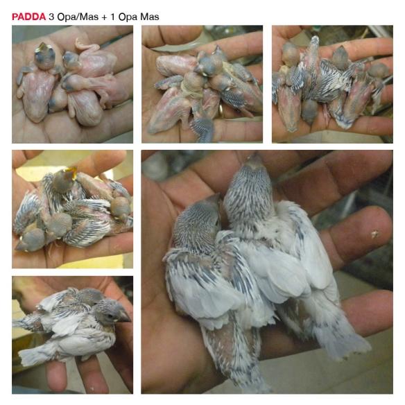 Base PADDA14