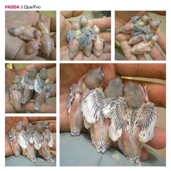 Base PADDA2