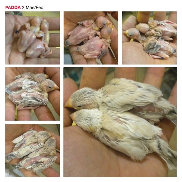 Base PADDA8